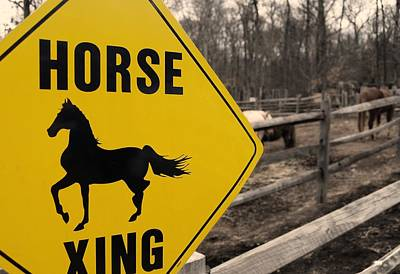 Photograph - Equine Caution by JAMART Photography