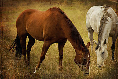 Two Horses Photograph - Equine Friends by Theresa Tahara
