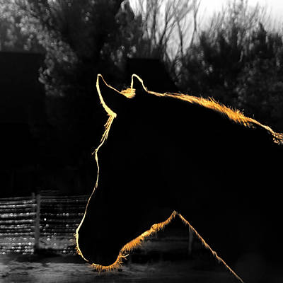 Beautiful Cowgirl Art Photograph - Equine Glow by Steven Milner