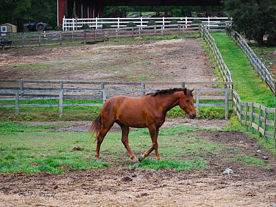 Photograph - Equine Grace by Paulette B Wright
