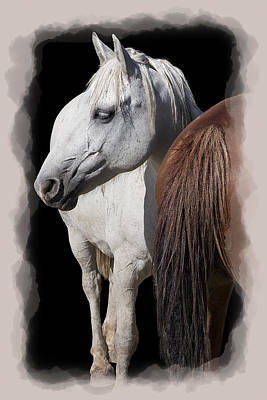 Race Horse Digital Art - Equine Horse Head And Tail by Daniel Hagerman