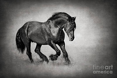 Equine In Motion Art Print by Kathy Weigand