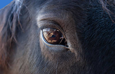 Horse Photograph - Equine In Sight by Sheryl Cox