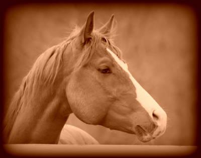 Horses Photograph - Equine Reverie Vi - Sepia by Aurelio Zucco