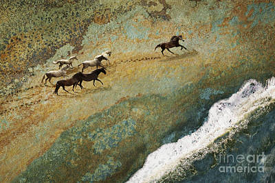 Photograph - Equine Seascape by Melinda Hughes-Berland