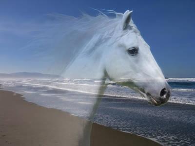 Photograph - Equine Shores by Athena Mckinzie