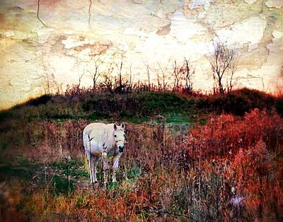 Equine Stare Art Print