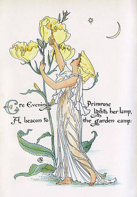 Primroses Drawing - Ere Evening Primrose Lights Her Lamp by Mary Evans Picture Library