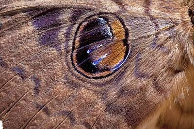 Erebus Photograph - Erebus Moth Wing Markings by Science Photo Library