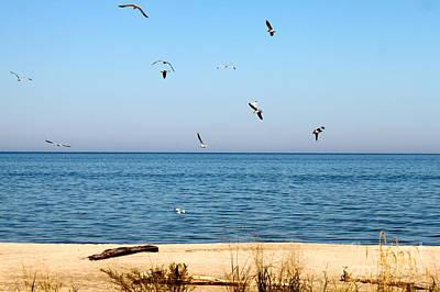 Erie Birds And Beach Art Print by Jay Nodianos