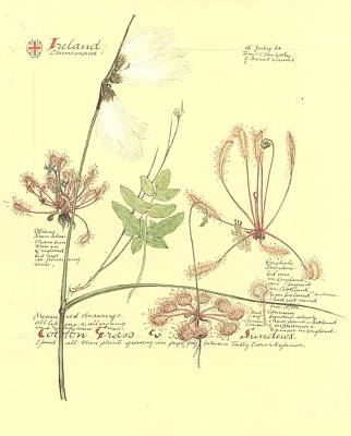 Muriel Photograph - Eriophorum Sp. And Drosera Sp., Artwork by Science Photo Library