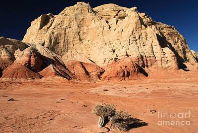 Photograph - Escalante Lone Tree by Adam Jewell