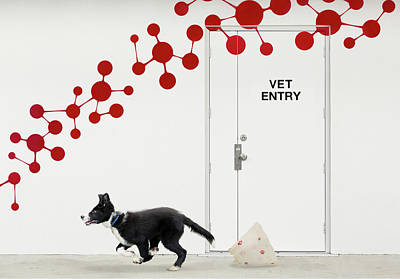 Puppy Wall Art - Photograph - Escape At The Vet by Jacqueline Hammer