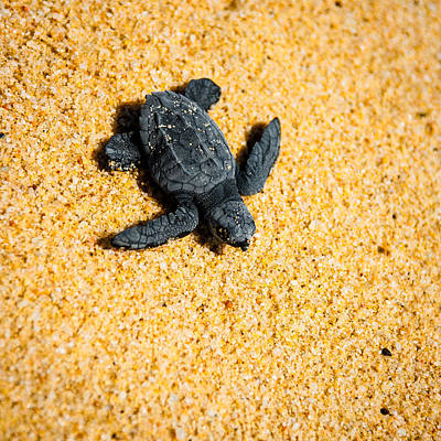 Sea Turtles Photograph - Escape by Sebastian Musial