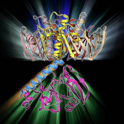 Escherichia Coli Heat-labile Enterotoxin Art Print