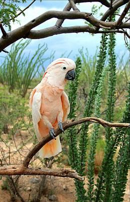 Esher Photograph - A Moluccan Cockatoo by Kimmi Craig