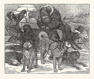 Harness Drawing - Eskimaux Harnessing Their Dogs To A Sledge by English School