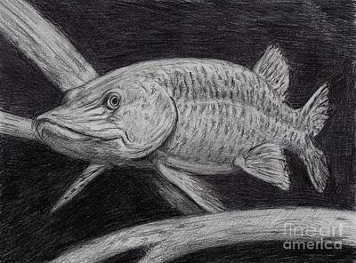 Esox Masquinongy Art Print by Larry Green
