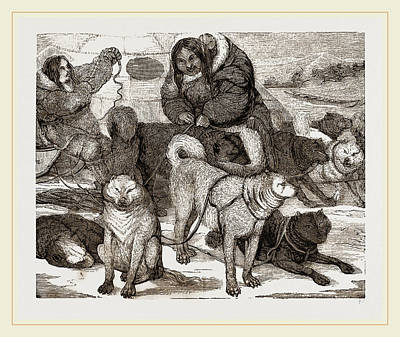 Harness Drawing - Esquimaux Dogs Harnessed To A Sledge by Litz Collection