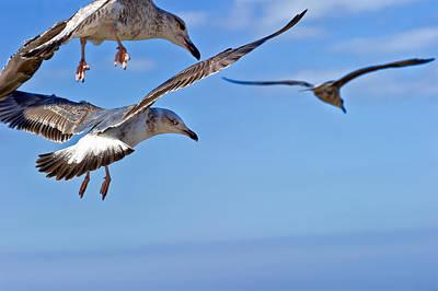 Photograph - Essaouira Seagull by Tomasz Dziubinski