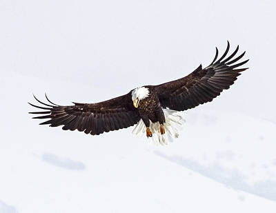 Essence Of Eagle Art Print