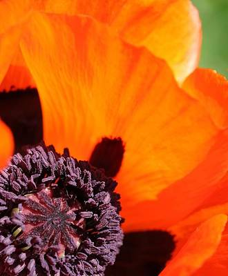 Essence Of Poppy Art Print by  Andrea Lazar