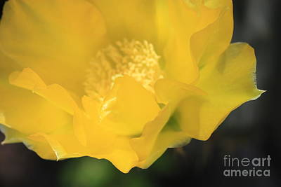 Essence Of Yellow Art Print by Cathy Dee Janes