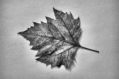 Merging Photograph - Essence...leaf Exposer Merge by Tom Druin