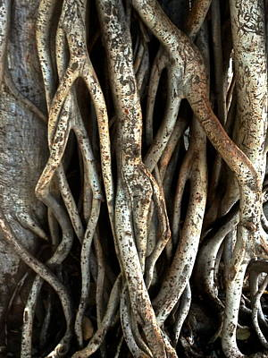 Photograph - Establishing Roots by Jeff Gater
