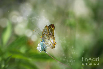 Pop Art Rights Managed Images - Ethereal Butterfly Royalty-Free Image by Anne Kitzman