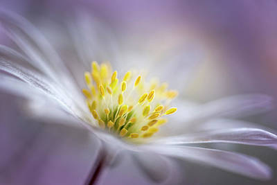 Macro Flower Photograph - Ethereal by Christl Deckx