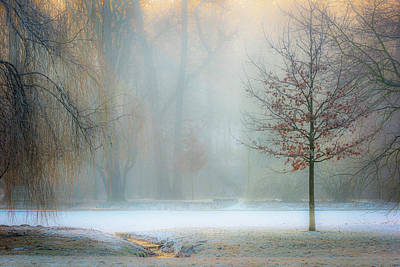 Winter Trees Photograph - Ethereal Daybreak by Marek Boguszak