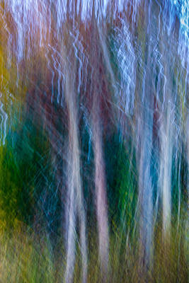 Photograph - Ethereal Forest by Jennifer Kano