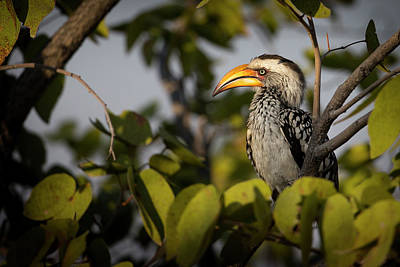 Hornbill Wall Art - Photograph - Etosha National Park, Namibia, Africa by Janet Muir