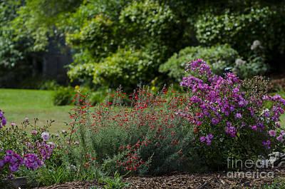 Amy Hamilton Animal Collage - Etude Gardens by Judy Wolinsky