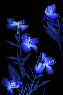 Blue Floral Photograph - Etude In Blue by Andrey Shumilin