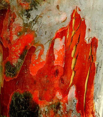 Photograph - Eucalyptus Bark by Peter Mooyman