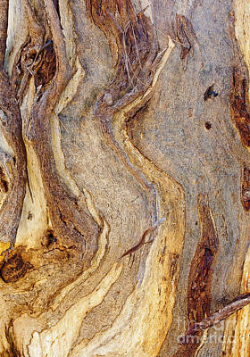 Photograph - Eucalyptus Bark by Steven Ralser