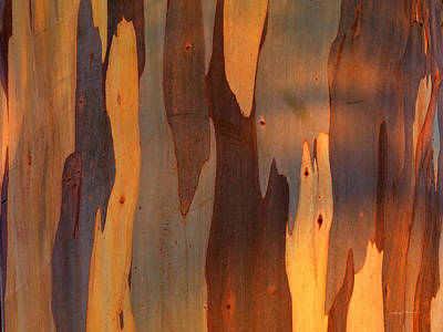 Photograph - Eucalyptus Form 5 by Leland D Howard
