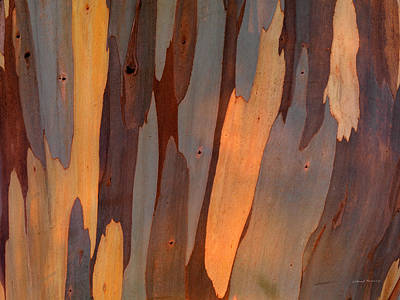 Old Growth Forest Photograph - Eucalyptus Form 6 by Leland D Howard