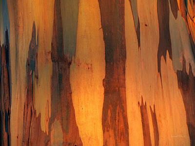Photograph - Eucalyptus Form 7 by Leland D Howard