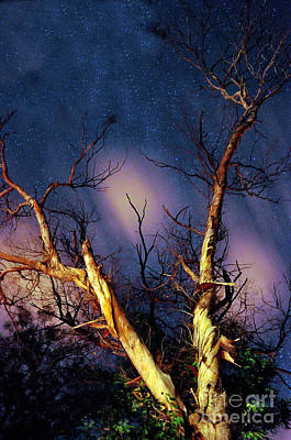 Eucalyptus Night Tree Art Print by Petros Yiannakas