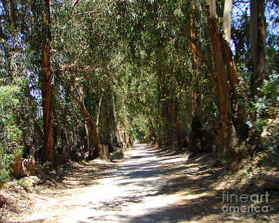 Photograph - Eucalyptus Road by Lew Davis