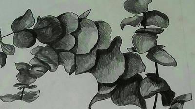 Eucalyptus Sprigs Art Print