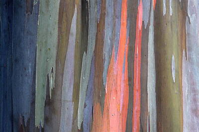 Photograph - Eucalyptus Tree Bark by Karon Melillo DeVega