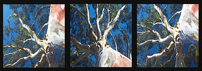 Photograph - Eucalyptus Tree Panel Triptych by SC Heffner