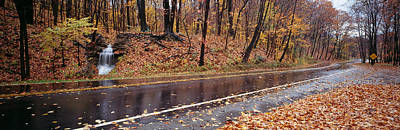 Fallen Leaf Photograph - Euclid Creek, Parkway, Ohio, Usa by Panoramic Images