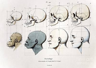 Social Darwinism Photograph - Eugenic Facial Angle Theory, Petrus by Paul D. Stewart