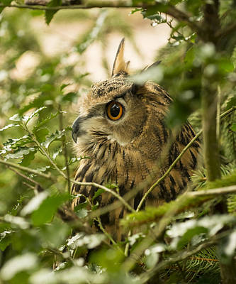 Eurasian Eagle-owl 2 Art Print