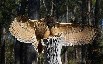 Eurasian Eagle Owl Coveting His Prey Art Print by Paulette Thomas
